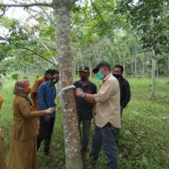 Pembinaan Teknis penyadapan karet di Desa Prangat Baru Kec. Marang Kayu oleh Kabid. Produksi
